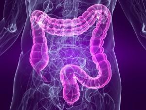 Gastrointestinal Health